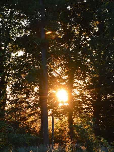 zie de zon schijnt door de bomen